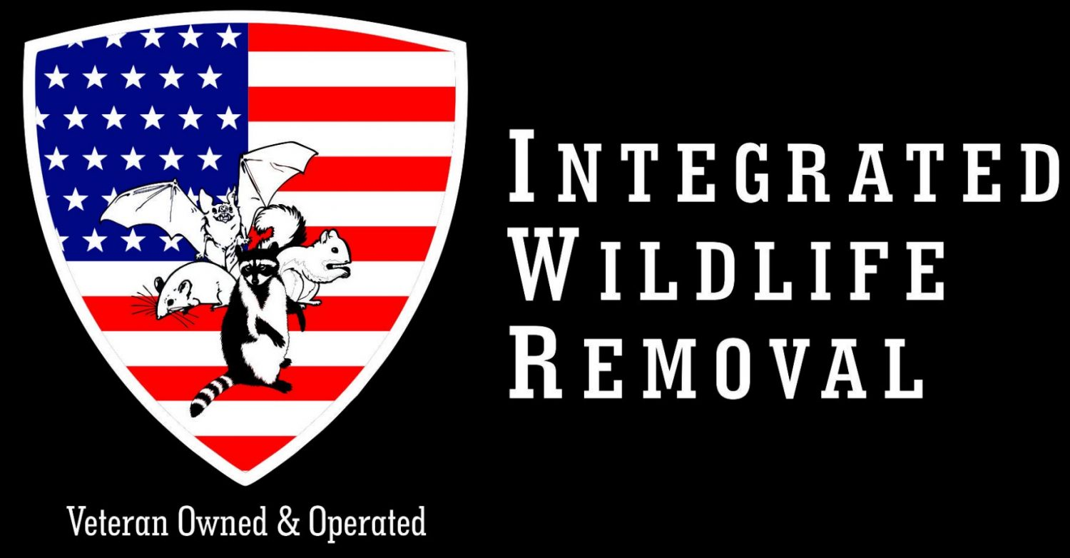 Integrated Bat & Wildlife Removal